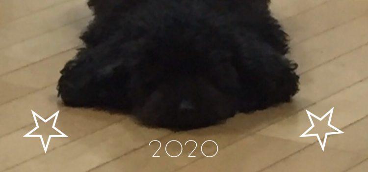 【謹賀新年 2020/01/01】